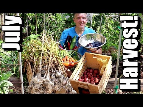 July Vegetable Garden Harvest: Local Food at Its Best! (2019)