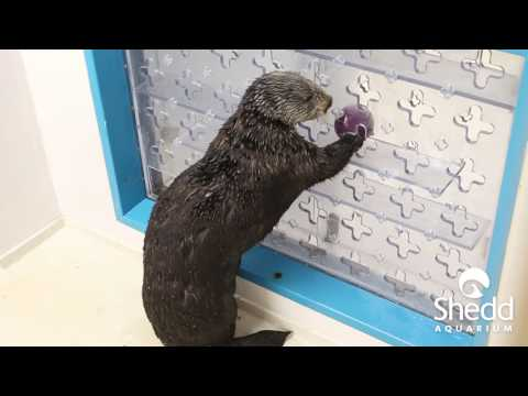 Puzzle Play with Sea Otter Mari