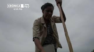 Impulsan bancos de semillas en el Triángulo Minero para una mejor producción -Nicaragua