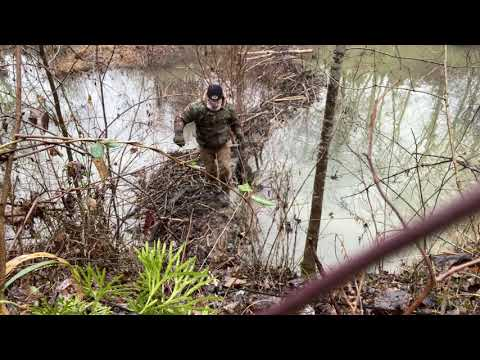 Beaver Set 330 Free Trappers Journal Part 10