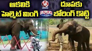 Elephant Eats Helmet, Elephant Uses Hand Pump to Drink Water   V6 Teenmaar - V6NEWSTELUGU
