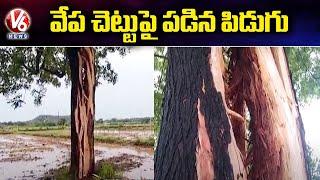 వేప చెట్టుపై పడిన పిడుగు | Lightning Hits Neem Tree | Suryapet | V6 News - V6NEWSTELUGU
