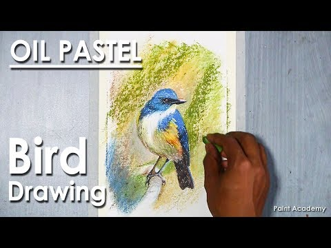 How to Draw Bird in Oil Pastel : Himalayan bluetail