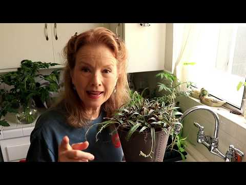 CREATE an INDOOR GARDEN - Part 2 | California Gardening in Containers | BLOOPERS