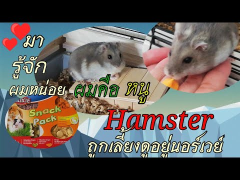 หนูแฮมสเตอร์--Hamster--Ep.2ถ้า