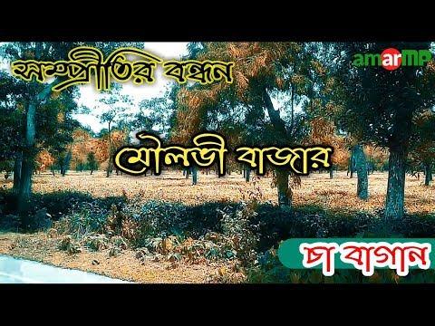 সম্প্রীতির বন্ধন মৌলভী বাজার চা বাগান