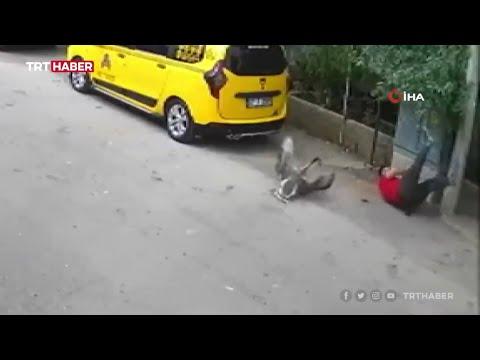 Kendisine saldıran kazları satmaya karar verdi