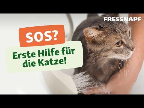 Erste Hilfe bei Katzen