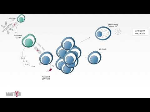 Mabtech Tutorial - A Short Introduction to Adaptive Immunity