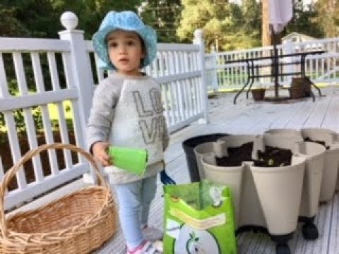 Gardening with Kids, Sowing Seeds, Worm Castings