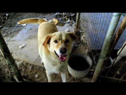 Video: Galiu lažintis - Kad po šio video nebedrįsi tvot šuniui už tai kad jis prikakojo ant grindų