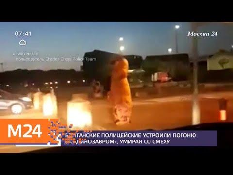 """Британские полицейские выложили в Сеть погоню за """"динозавром"""" - Москва 24"""