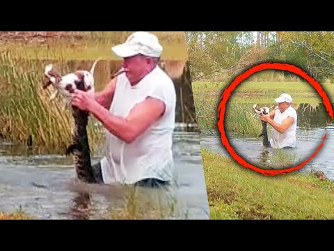 Man Uses His Bare Hands to Save Puppy From Alligator's Jaws