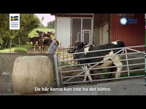 Skånemejerier ost
