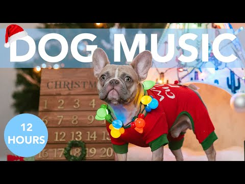 XMAS MUSIC FOR DOGS! Feliz Navidad Relaxing Song for Dogs!