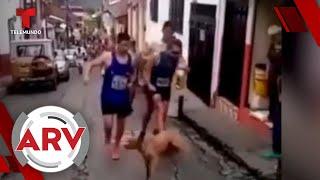 Atleta causa indignación por patear a un perro durante competencia   Al Rojo Vivo   Telemundo