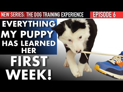 Everything I Taught My Puppy The First Week & What We'll Do Next! (DTE Ep. 6)