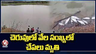 వికారాబాద్ జిల్లాలో దారుణం..చెరువులో వేల సంఖ్యలో చేపలు మృతి | V6 News - V6NEWSTELUGU