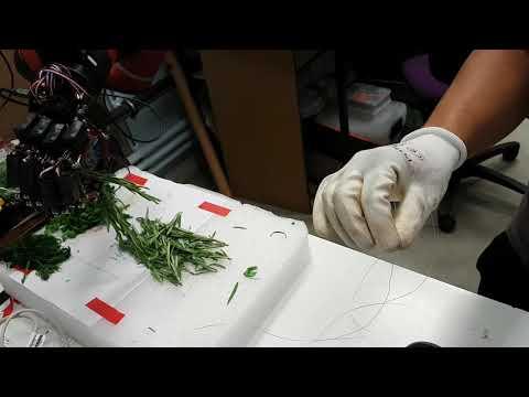 Robotic Herb Picking