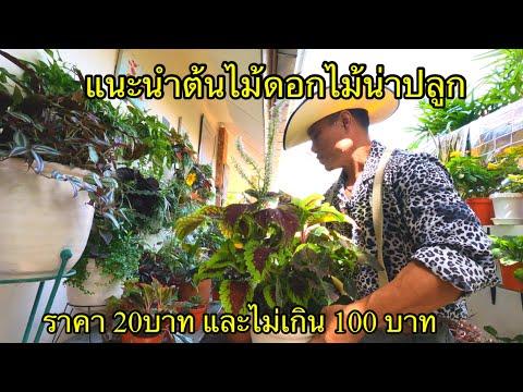 ต้นไม้ดอกไม้น่าปลูก-ราคา20-บาท