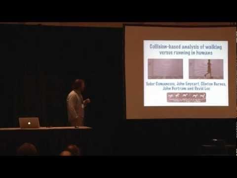 Collision-based analysis of walking versus running in humans