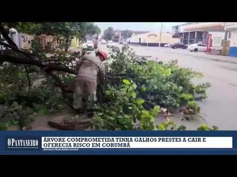 Árvore comprometida tinha galhos prestes a cair e oferecia risco em Corumbá