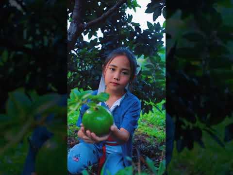 avocado-picking-cinematic-#sho