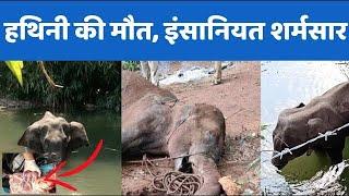 Pregnant Elephant की मौत के बाद गुस्साया देश, लोगों ने कहा - #JusticeForElephant - AAJKIKHABAR1