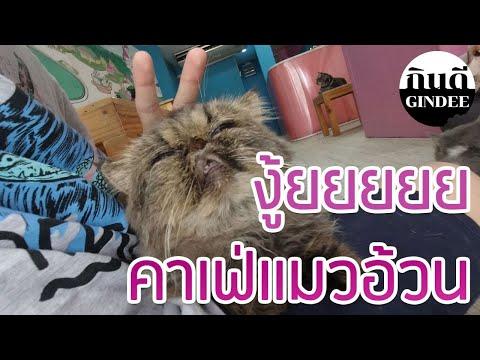 มุดเงินเดือน-:-มาคาเฟ่แมวอ้วนน