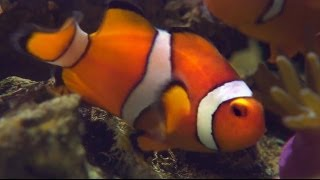 Disney LIED. Finding Nemo is a HERMAPHRODITE! - Smarter Every Day 115