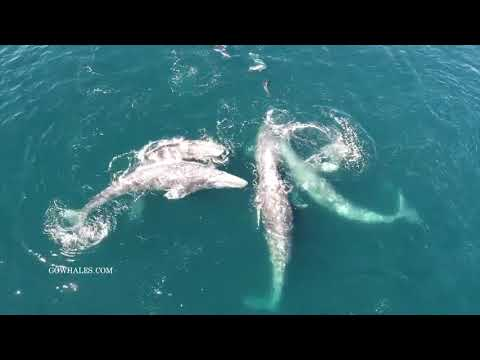 connectYoutube - Marine Parade: Abundant marine life in Monterey Bay