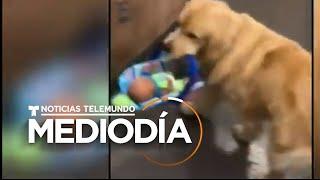 Cachan a un ladrón de cuatro patas con el hocico en la masa   Noticias Telemundo