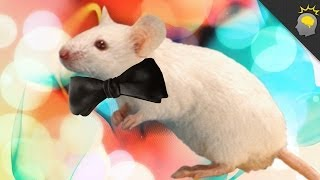Hey There Sexy Mouse - Epic Science