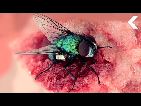 The Flies on a Dead Body Can Help Solve a Murder