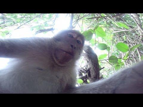 Monkey Steals GoPro Hero 3+