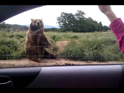 Video: Kai kurie gyvūnai - turi daugiau mandagumo negu žmogus