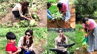 Actress Shilpa Shetty Plucking Organic Vegetables | IG Telugu - IGTELUGU
