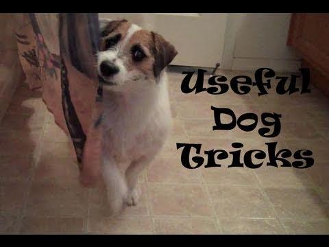 Video: Ne veltui sakoma - kad šuo - geriausias žmogaus draugas