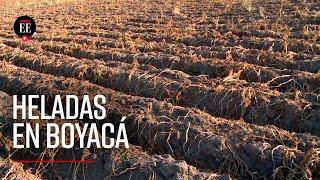 Heladas han afectado a más de 13.500 campesinos en Boyacá - El Espectador
