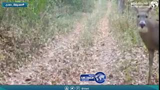 كاميرا الغابه سجلت هذا المشهد الغريب لغزال