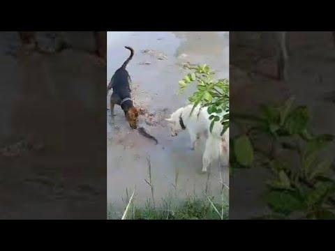 น้องหมากับปลาช่อน-‼️The-Dogs-W