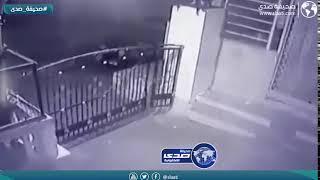 فهد يركض خلف قطة المنزل