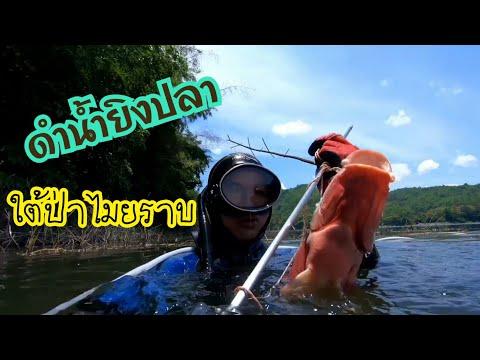 ดำน้ำยิงปลา-ใต้กอไมยราบใต้น้ำ
