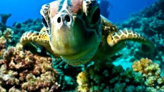 Maldives diving - Best spots for Maldives diving