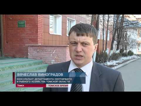 В Томской области начали взращивать пелядь для восстановления водных биоресурсов.