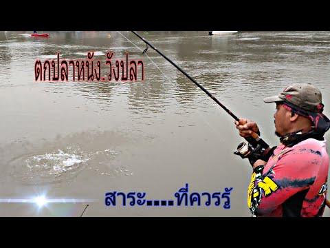 ตกปลาวังที่แม่น้ำเจ้าพระยา--เข