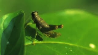 12 Animals in The Amazing Amazon (with Slow Mo) - Smarter Every Day 76