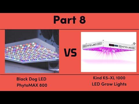 Black Dog LED PhytoMAX 800 vs. Kind K5-XL1000 LED Grow Lights - Part 8