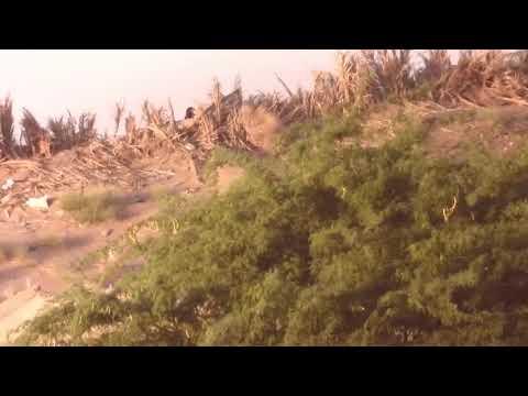 شاهد: مصرع ثلاثة قناصة حوثيين على أيدي القوات المشتركة في الحديدة