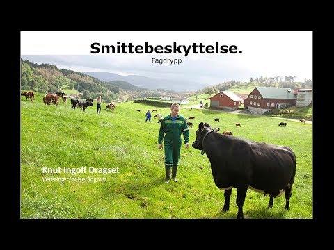 Praktiske løsninger for smittebeskyttelse v/knut Ingolf Dragset
